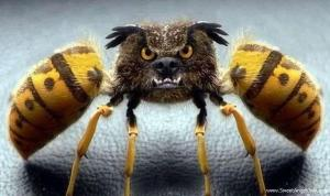 Funny insect images2